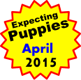 Expecting Puppies    April 2015