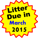 Litter Due in   March 2015