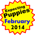 Expecting Puppies February 2014
