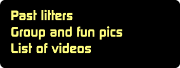 Past litters Group and fun pics List of videos