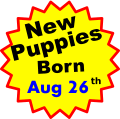 New Puppies Born Aug 26 th