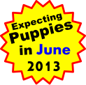 Expecting Puppies in June 2013