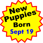 New Puppies Born Sept 19