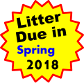 Litter Due in   Spring 2018