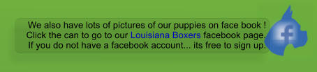 We also have lots of pictures of our puppies on face book ! Click the can to go to our Louisiana Boxers facebook page. If you do not have a facebook account... its free to sign up.