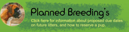 Planned Breeding's Click here for information about proposed due dates on future litters, and how to reserve a pup.