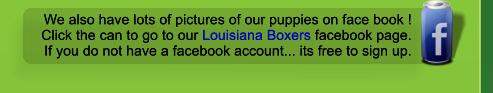 We also have lots of pictures of our puppies on face book ! Click the can to go to our Louisiana Boxers facebook page. If you do not have a facebook account... its free to sign up. We also have lots of pictures of our puppies on face book ! Click the can to go to our Louisiana Boxers facebook page. If you do not have a facebook account... its free to sign up.