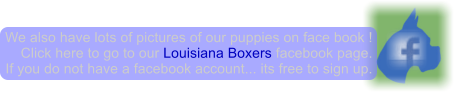 We also have lots of pictures of our puppies on face book ! Click here to go to our Louisiana Boxers facebook page. If you do not have a facebook account... its free to sign up.
